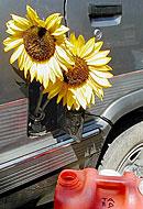 La Agencia Europea del Medio Ambiente recomienda suspender el objetivo del 10% para los biocombustibles
